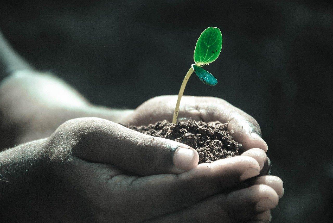Aprenda a não arrancar as sementes que você mesmo plantou